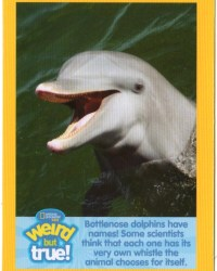 2018-april-weird-but-true-national-geographic-mcdonalds-happy-meal-toys-cards-dolphin-front.jpg