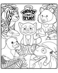 Happy Meal Coloring Sheets Kids Time