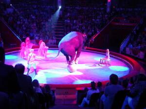 An elephant on a ball