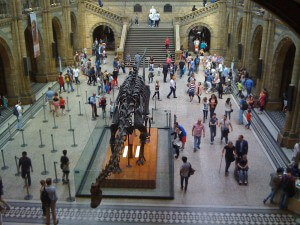 Entrance hall and Diplodocus skeleton at the Natural History Museum