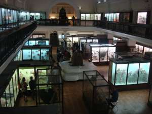 The Natural History Room at the Horniman