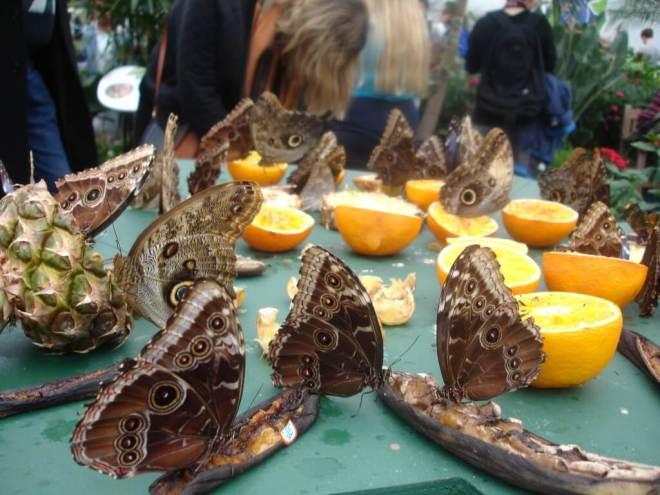 Butterflies feeding at Sensational Butterflies NHM