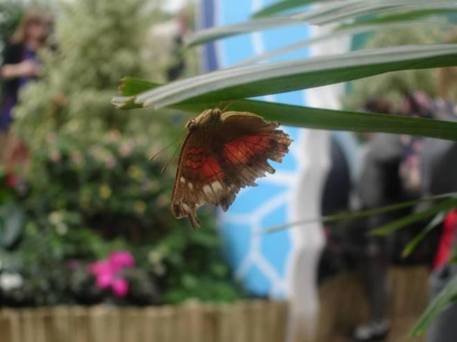 Pink and green butterfly at Sensational Butterflies NHM