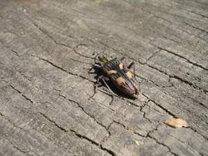 Bug on wood at Chartwell