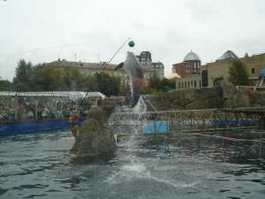 Dolphin at Moscow Zoo