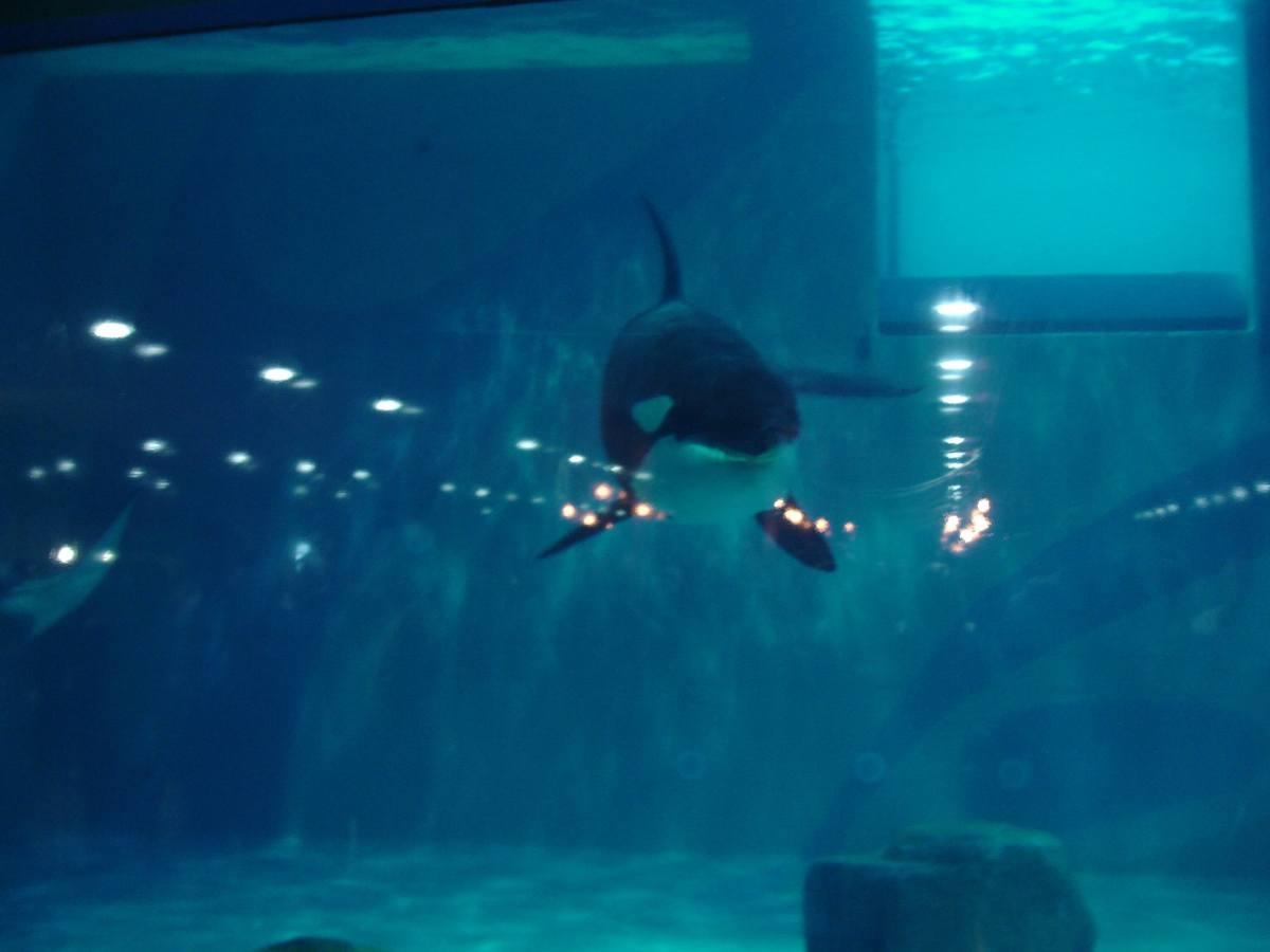 Moskvarium Aquarium, Moscow