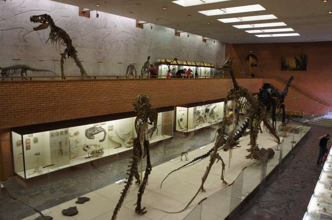 Orlov Paleontology Museum Moscow