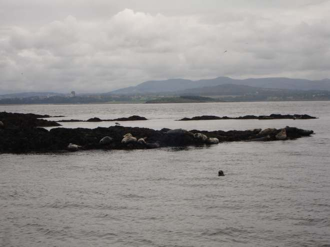 Seals around Inchcolm Island