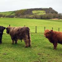 Heads of Ayr Farm Park, Scotland: more than just chickens and pigs.
