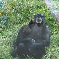 Day tripping to Belfast Zoo in Northern Ireland from Scotland
