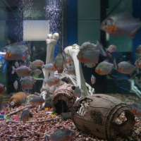 Pet fish at the Moscow Sea Aquarium at Chistye Prudy