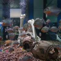 Pet fish at the Moscow Sea Aquarium at Chistye Prudy