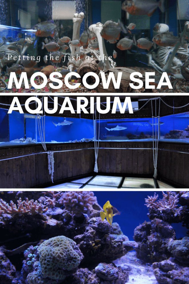 The Moscow Sea Aquarium at Chistye Prudy is a small family friendly fish filled attraction in the centre of Moscow