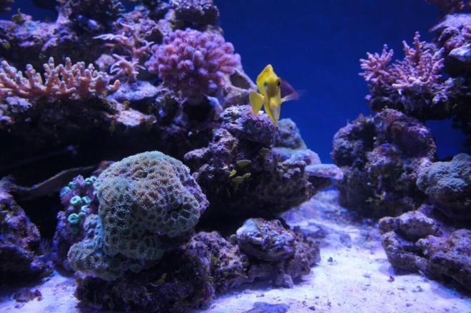 Tropical fish Moscow Sea Aquarium Chistye Prudy