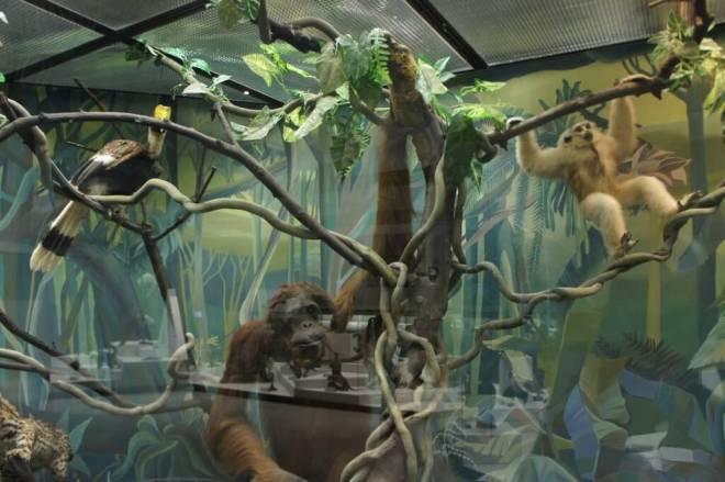 Orangutan Darwin Museum Moscow