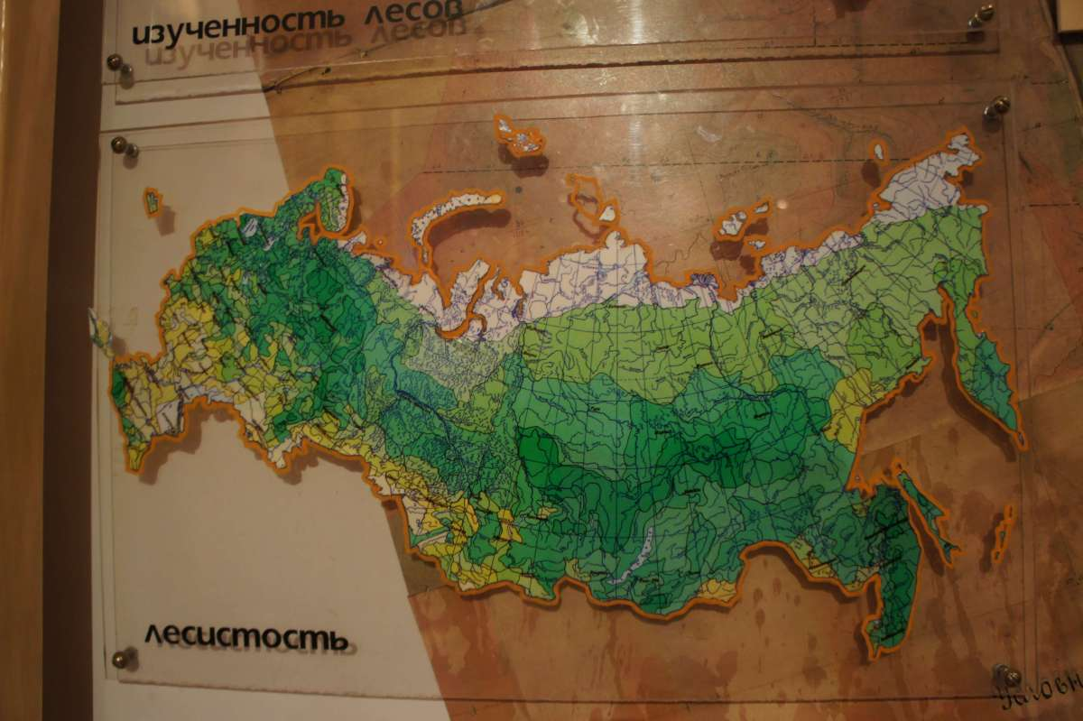 How and why to get lost at the Russian Forest Museum