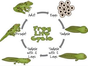lifecycle image