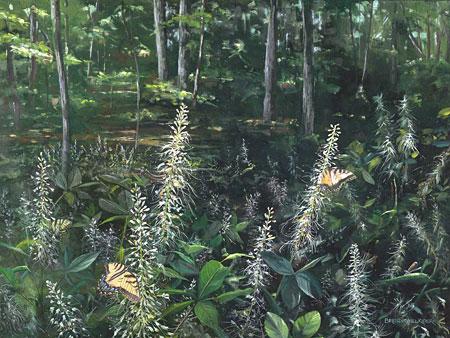 Bottlebrush Buckeye & Swallowtails