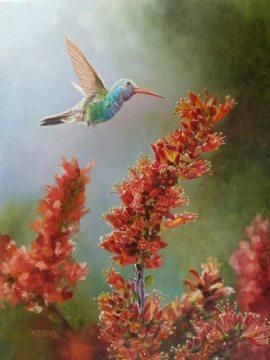 Broad-Billed Hummingbird & Ocotillo