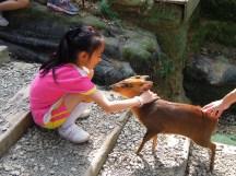 小孩子在「可愛動物區」裡待了較長時間,特別是「山羌」區。山羌是體型最小的鹿,有點神經質,容易受到驚嚇。不過,4 個女生和山羌從陌生到許多互動,這應該是她們這一回最重要的回憶了~