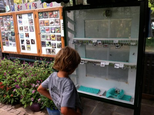 Observing future butterflies