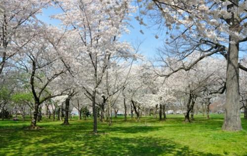 blossom_today