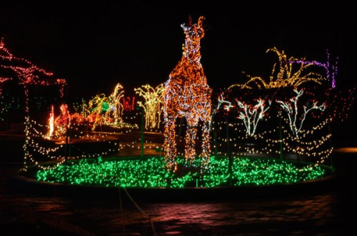 One of many brilliant twinkling scenes at Brookside's Garden of Lights