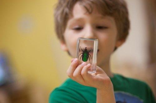 preschool-science-bug