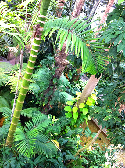 You're in the jungle, baby!  Go tropical during winter at the U.S. Botanic Garden.