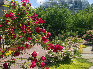 Roses are red (and yellow and pink) outside at the USBG
