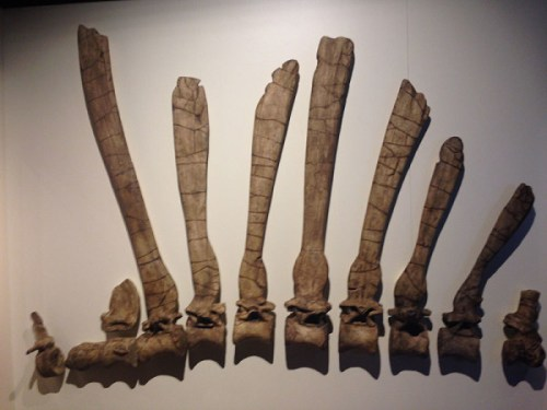spino_fossils