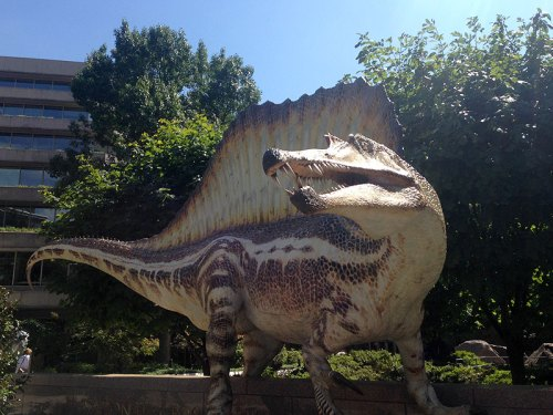 "A life-size ""in the flesh"" model of Spinosaurus in the Nat Geo courtyard is a must-see along with the exhibit"