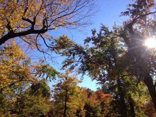 fall_treetops
