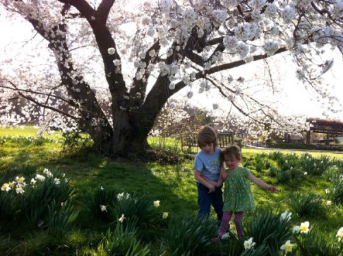 Playing under blossoms at the Arboretum