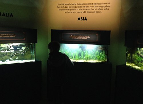 monsterfish_aquariums