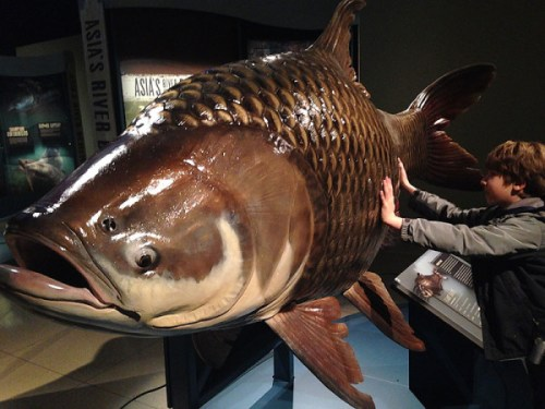 monsterfish_touch