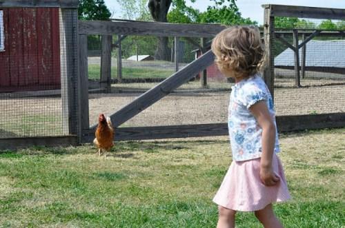 A chicken encounter at Oxon Hill Farm