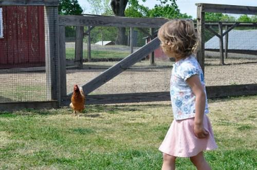 Hey, chicken lickin'