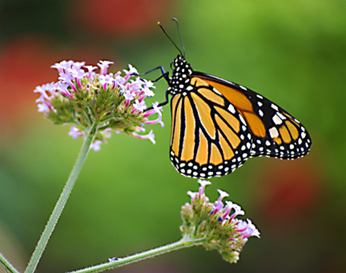 Fancy A Butterfly Garden Giveaway And Fall Festivals From Montgomery Parks