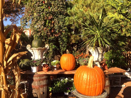 pumpkins_surroundings