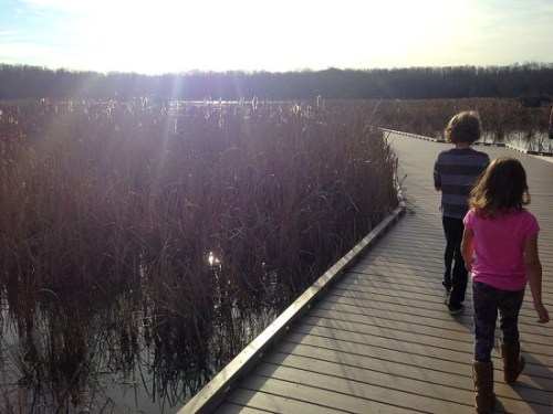 Exploring the wetlands at Huntley Meadows
