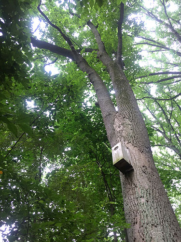 woodend_birdhouse