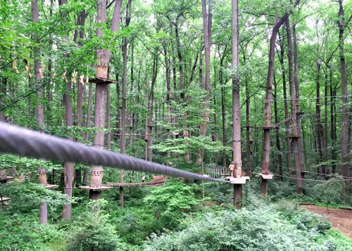 Zip through the trees at the Adventure Park at Sandy Spring Adventure Park