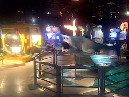 Eye-popping exhibits will thrill all ages