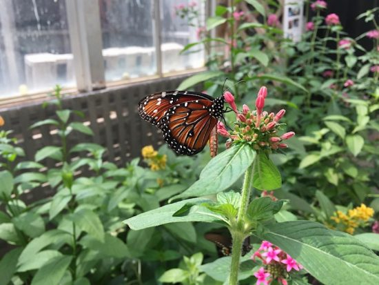 We All Seemed To Have Some U201cgoalsu201d For Our Visit (that Challenge I  Mentioned Before): The Girls Were On A Mission To Have Butterflies Land On  Them (Sasha ...