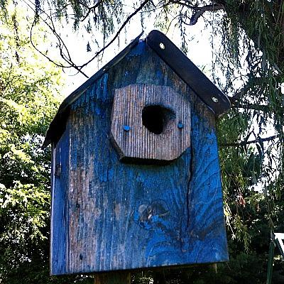 Placa de matrícula rústica Birdhouse - Birds & amp; Mariposas - Suministros Básicos de Artesanía - Suministros de Artesanía