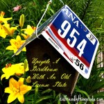 Upcycle An Old Birdhouse With A Old License Plate For A Roof! Beautiful!