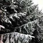 snowstorm-picture