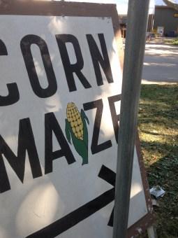 corn maize