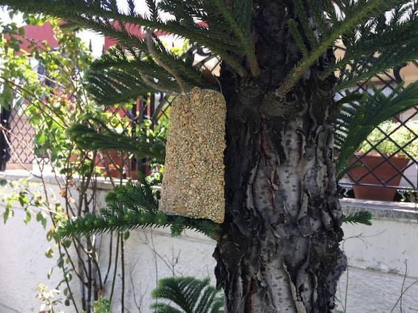 bird feeder for kids